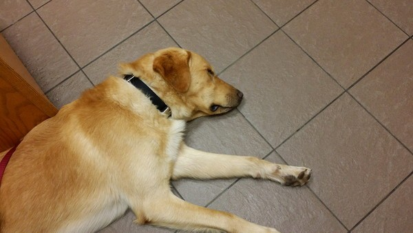 GhostBuster has been to a lot of vets. In this picture he's at an emergency clinic after eating cat litter.