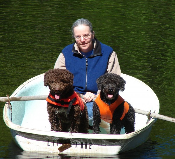 Spanish Water Dog courtesy Nancy Valley