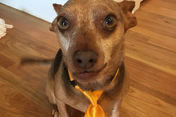A dog with a tie on.