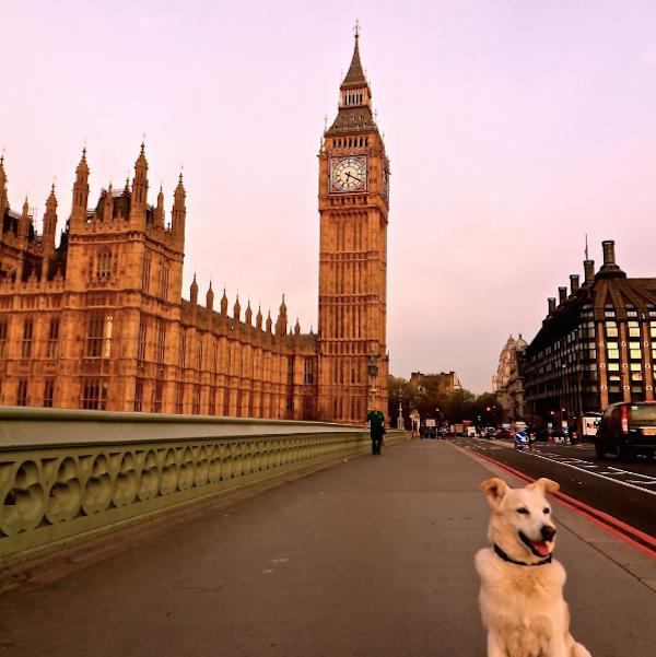 Ralph at Big Ben, London, England.