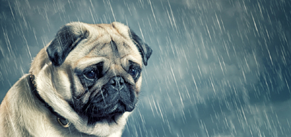 Can Dogs Cry?