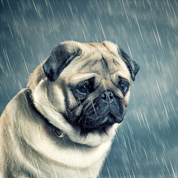Can Dogs Suffer From Sad