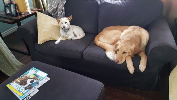 Always a gentleman, GhostBuster lets Marshmallow sit on his new couch.