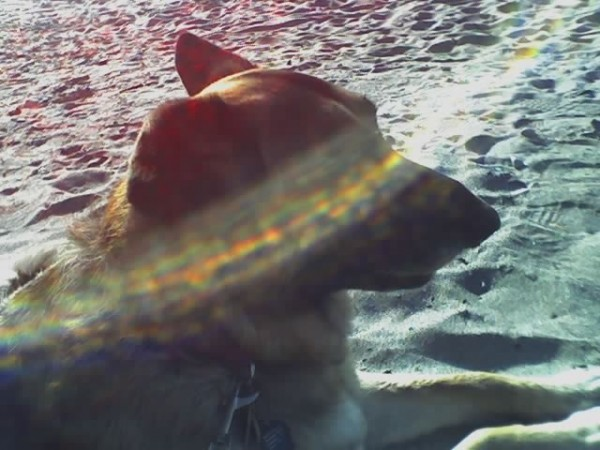 By Kat Merrill I took Ellie wherever I could, and she loved the beach. This is my favorite photo of her.