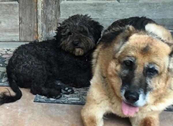 Richard Parker and his Shepherd friend, courtesy Lara Stonesifer