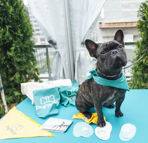 Royce repping for one of his fave brands. (Photo courtesy of Royce the Frenchie; By Emmy Park of StylePup)