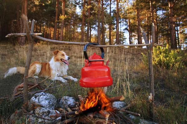 Dog near campfire by Shutterstock.