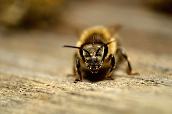 Bee by Shutterstock.