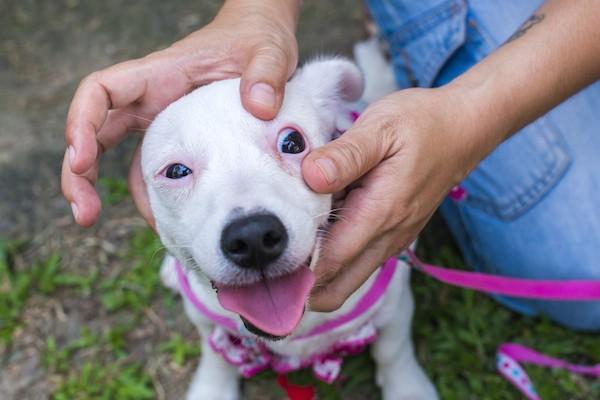 Vet checking dog's eyes by Shutterstock.