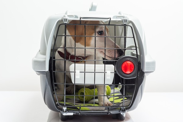 If your dog feels comfortable in their crate, it can be a safer travel option if secured. (Photo by Shutterstock)