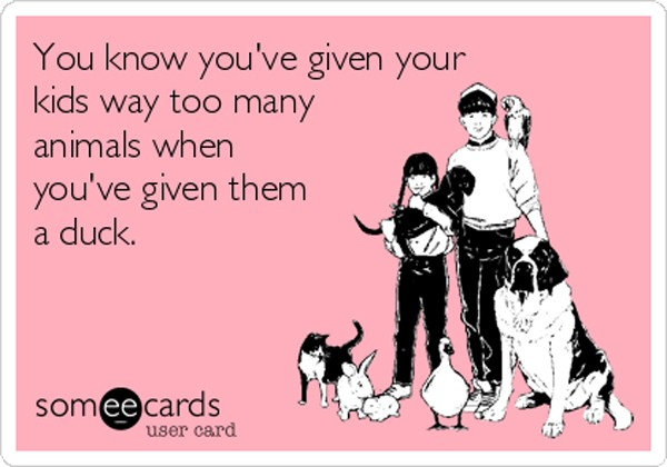 you-know-youve-given-your-kids-way-too-many-animals-when-youve-given-them-a-duck-96456
