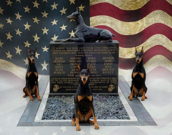 Marine Dog Breeds