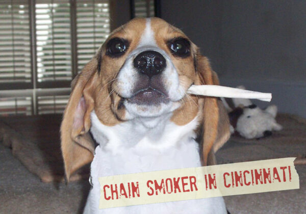 FF_Dogster_AskFrankQuestionPhotos_SmokingIndoors