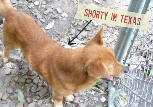 FF_Dogster_AskFrankQuestionPhotos_TexasHotDog