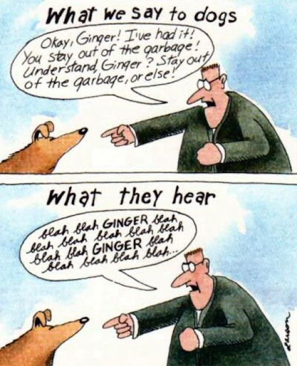 What they hear. (Cartoon by Gary Larson)