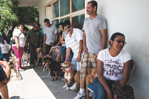 Dogs and their people wait in line at a Mexico clinic.
