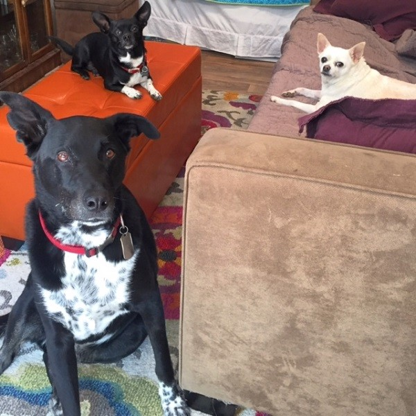 Housemates Riggins, Louie and Fredo. (Photo by Wendy Newell)