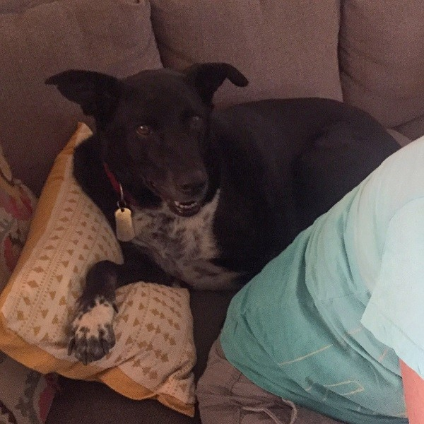 Snuggling on the sofa behind his second Mommy. (Photo by Wendy Newell)
