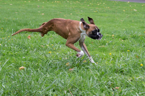 Duncan can run upright like a four legged dog. (All photos courtesy @duncanlouwho on Instagram)