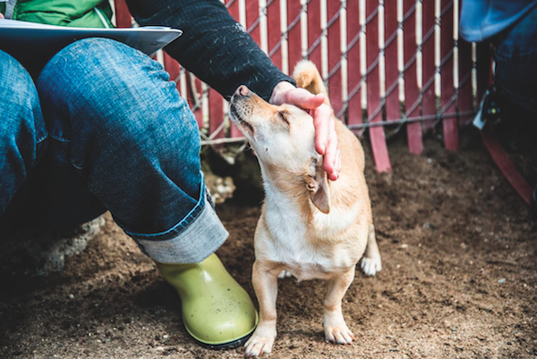 Touch can soothe a mildly upset or anxious canine. (Photo by Moncho Camblor)