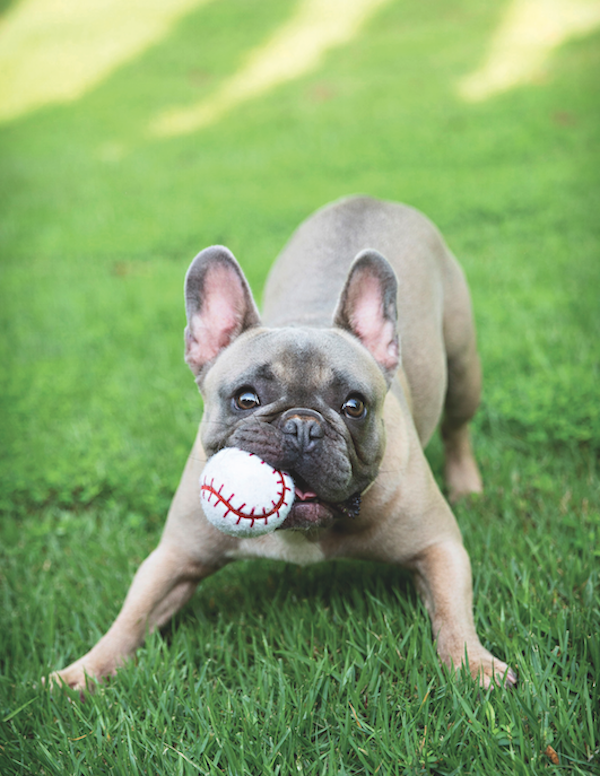 Dog with ball by Shutterstock.