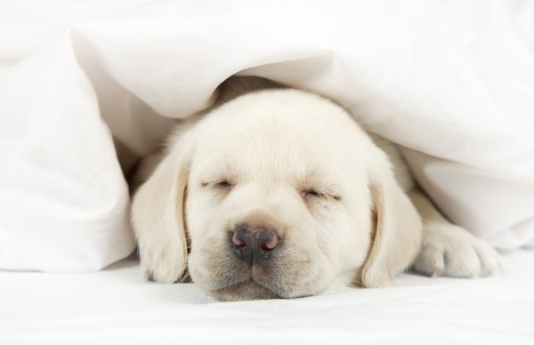 Letting Your Puppy Sleep In Your Bed Here S How To Do It