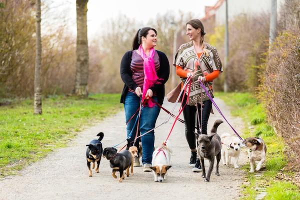 Dog walkers by Shutterstock.
