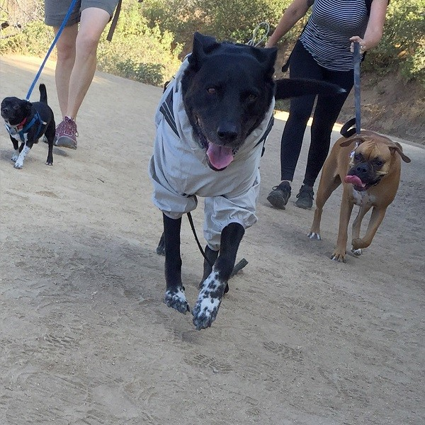 Riggins struts down the trail like it's a runway. (Photo by Wendy Newell)