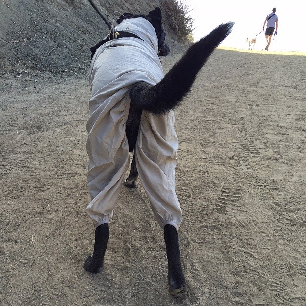Cute backside! (Photo by Wendy Newell)