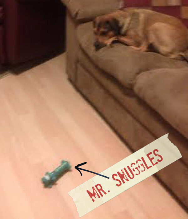 FF_Dogster_AskFrankQuestionPhotos_MrSnuggles
