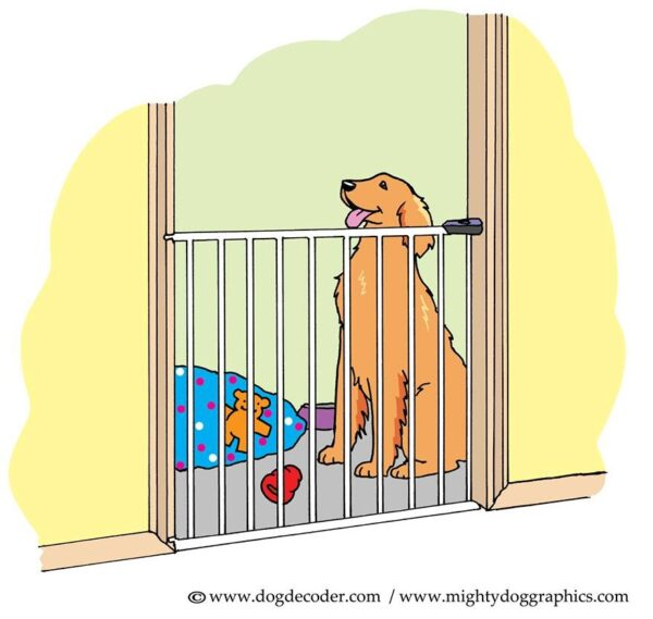 how to make dog stop barking in crate