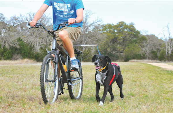 Bike tow leashes attach to the bike and your fully grown dog's harness. (Photo courtesy The Dog Outdoors)
