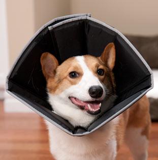 Make Dog Cone Fabric