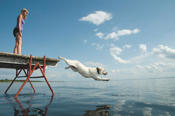 Dog jumping off a dock by Wojciech Gajda/iStock.