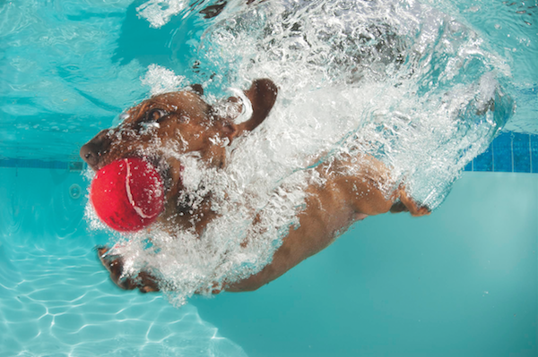 Dog fetching underwater by Rainer Von Brandis/iStock.