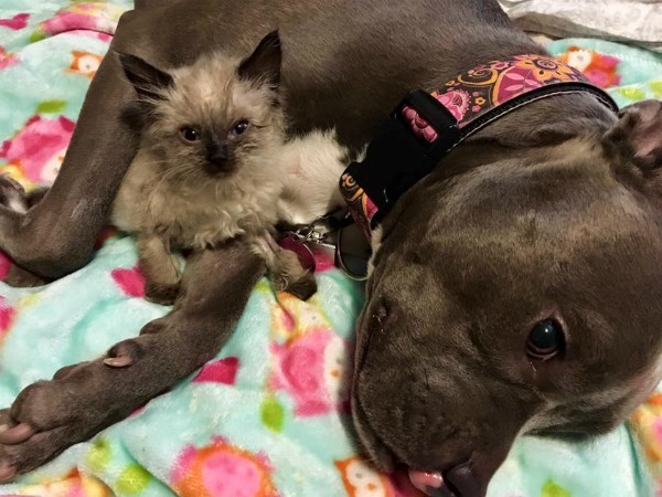 Everyone loves Ruby -- even this foster kitten. (All photos courtesy Ruby's Facebook page)