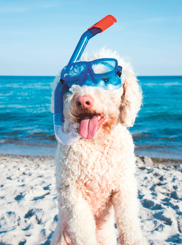 Dog on the beach by Shutterstock.