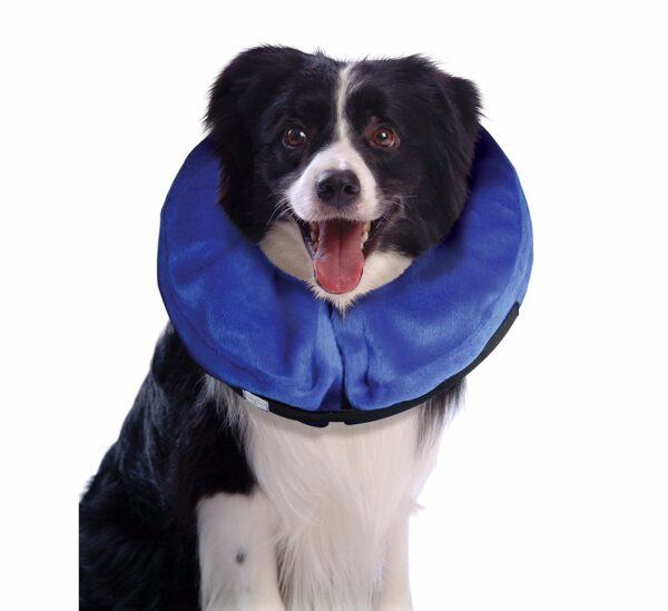 Dog Doesn T Like Collar