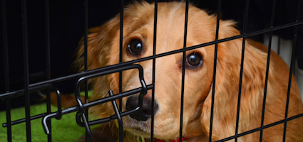 Why I Don't Use a Crate When Training Dogs