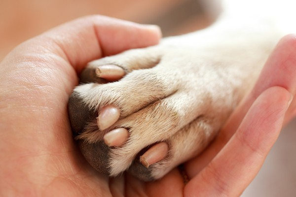 Human hand and dog paw by Shutterstock.
