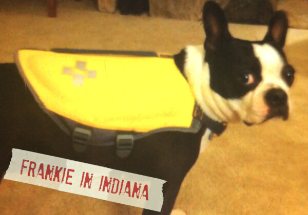 FF_Dogster_AskFrankQuestionPhotos_LifeJacket
