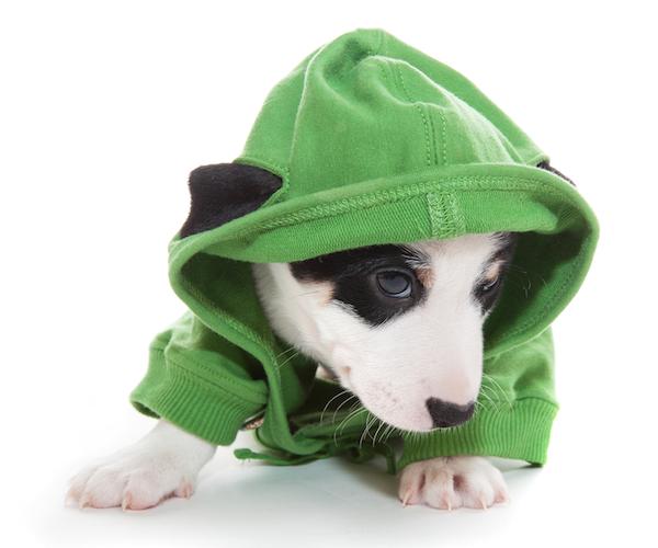 hound hoodie