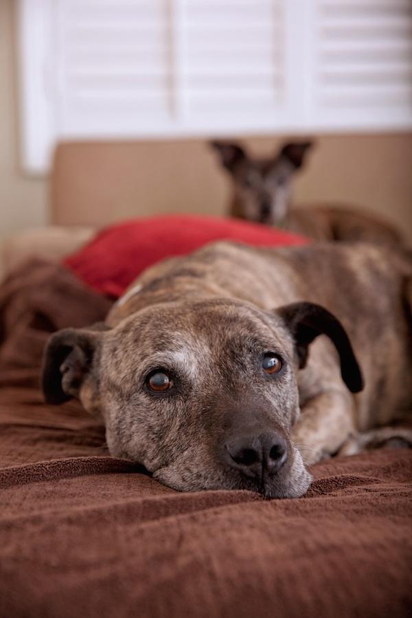 Lori Fusaro's pup Gabby. (Photo by Lori Fusaro)