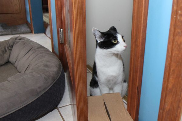 With 2 litter boxes in the basement, we used a system of bungee cords to pull the door closed and boxes to keep it open just wide enough for a cat, like Calvin here.