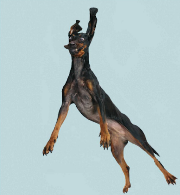 FlyingDogs2