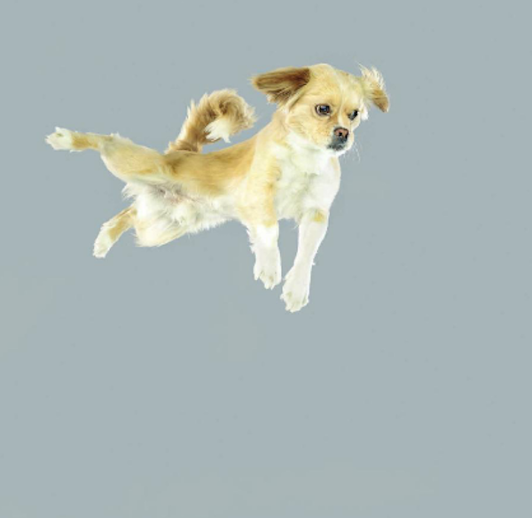 FlyingDogs3