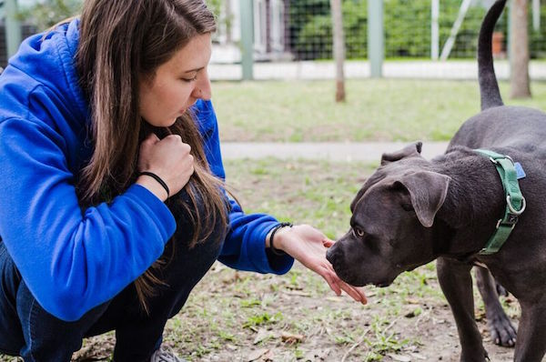 Volunteer Crystal works with Friends for Life dog Maxwell. (Photo courtesy Friends for Life)