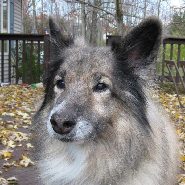 My sweet beautiful dog, Pasha.