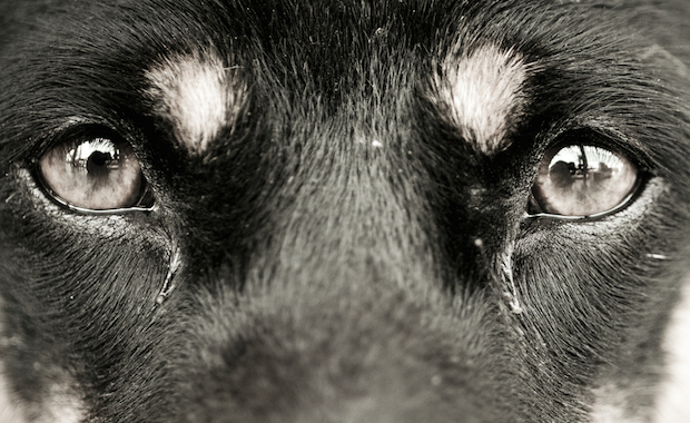 Ask a Vet: Why Do Dogs Get Eye Boogers? What About Tear ...