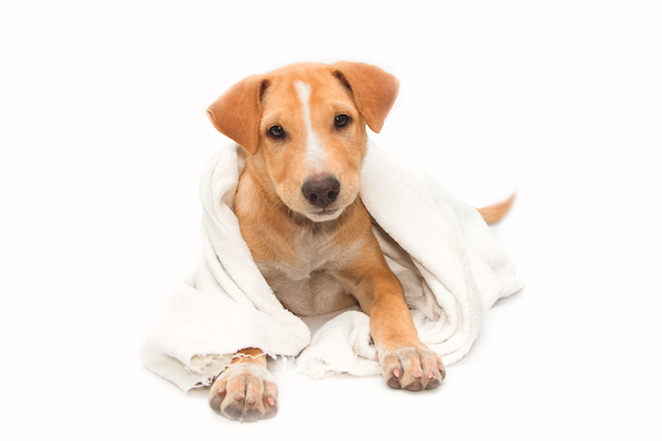 How Vinegar Can Help Keep Your Dog And Your House Clean